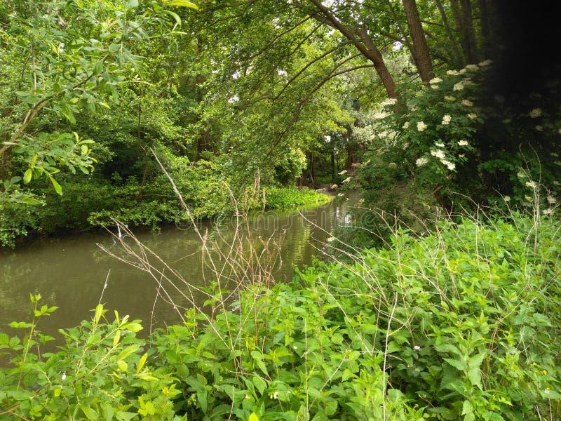 跑通过树桥梁的河的秀丽在夏天太阳下 免版税库存图片