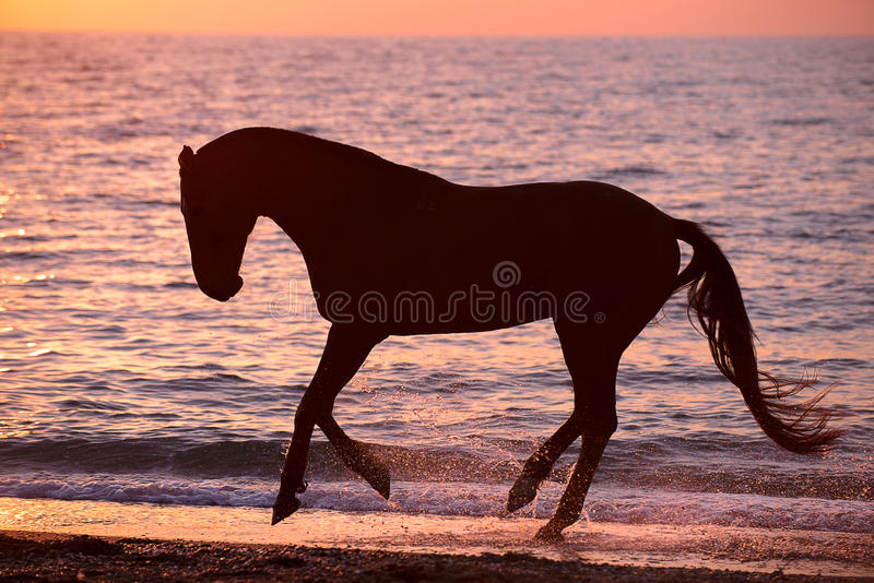 跑通过水的马 免版税图库摄影
