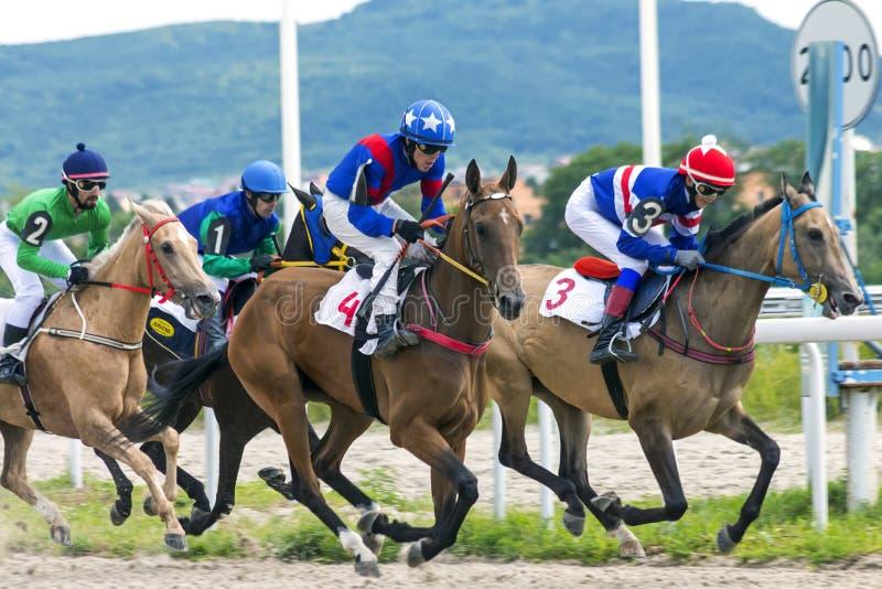 跑马在五山城 图库摄影