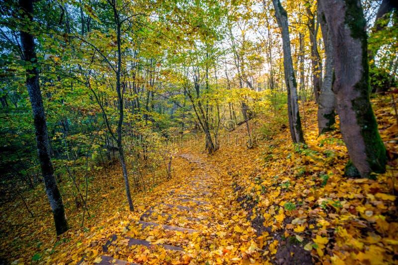跟踪道路的可爱的秋天森林 免版税库存照片