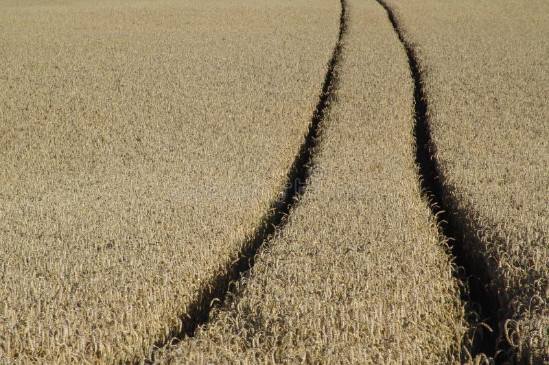 跟踪麦子 免版税库存照片