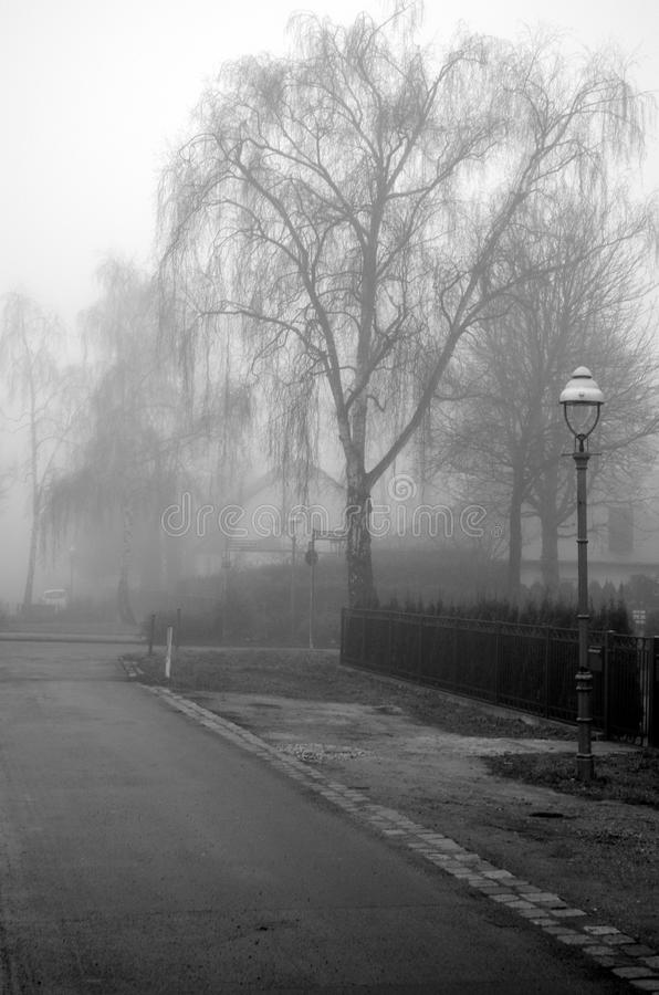 路、灯笼和树在清早薄雾在柏林,德国 免版税图库摄影