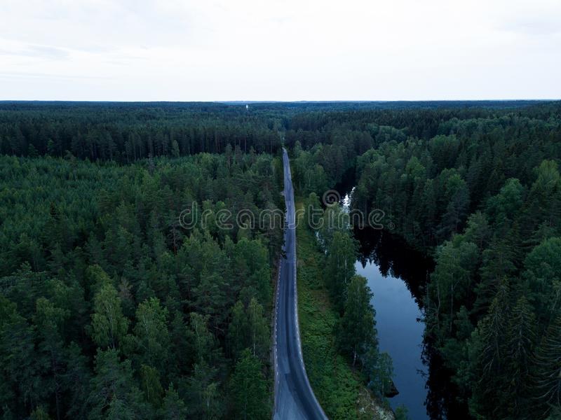 路低谷森林 库存图片