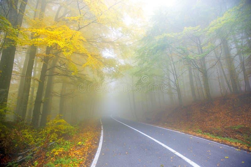 路低谷秋天季节的森林 图库摄影