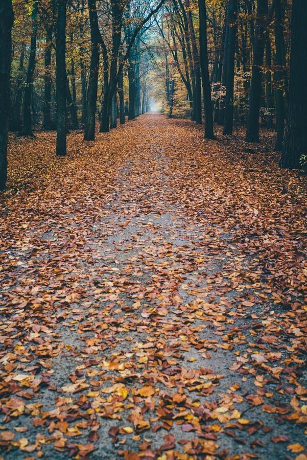 路到在叶子盖的森林里 免版税库存图片