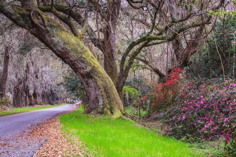 路到木兰种植园南卡罗来纳里 库存照片
