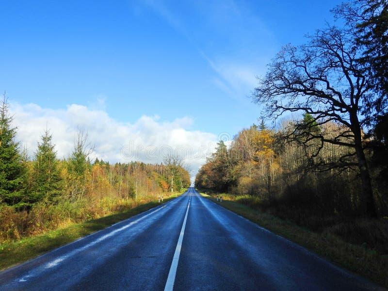 路和五颜六色的秋天树,立陶宛 免版税库存照片