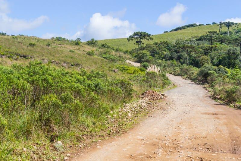 路和南洋杉angustifolia森林 库存照片