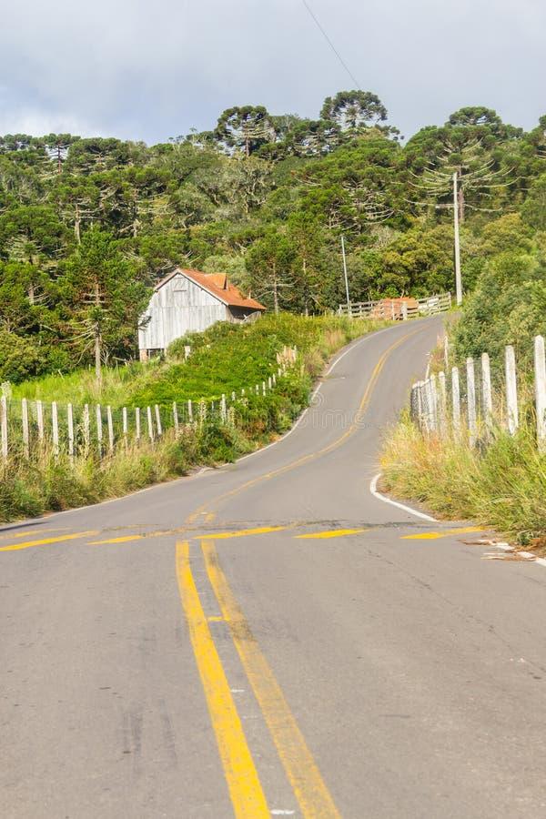 路和南洋杉angustifolia的木屋森林 免版税库存图片