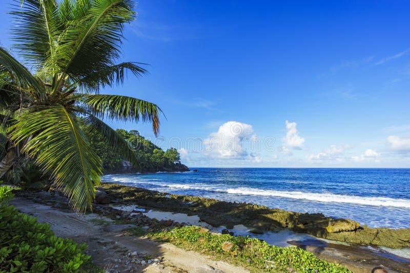 路和棕榈在塞舌尔群岛海滩2 免版税库存图片
