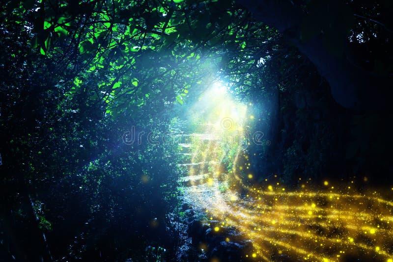 路和石台阶在有神秘的太阳光和萤火虫的不可思议和神奇黑暗的森林里 童话当中概念 皇族释放例证