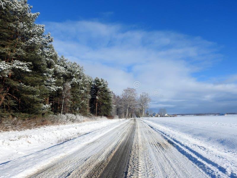 路和美丽的多雪的树在冬天,立陶宛 免版税库存图片
