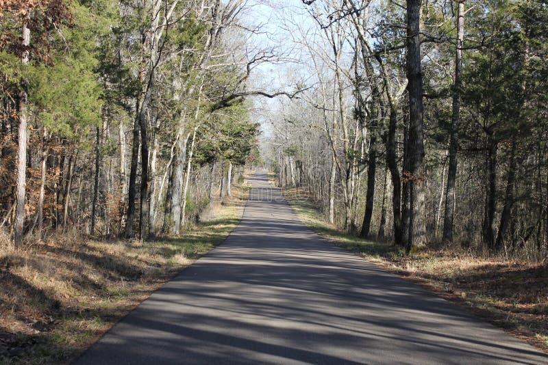 路和自然森林晴天 库存图片