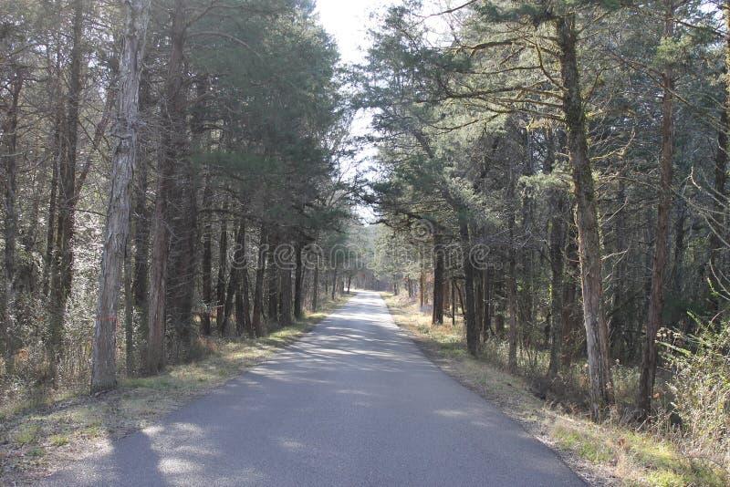 路和足迹森林晴天 图库摄影