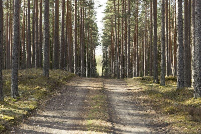 路在一个美丽的森林里早晨 秋天早期的森林俄国线索 免版税图库摄影