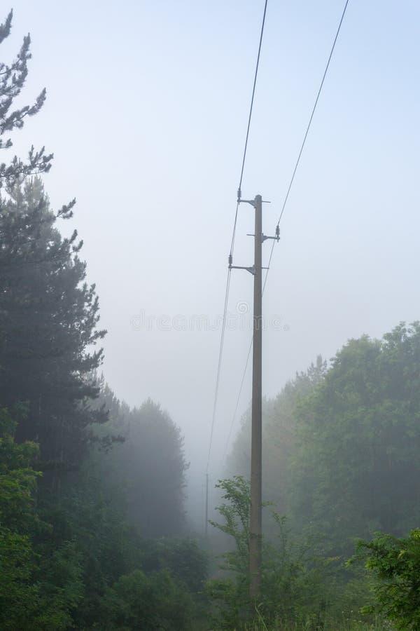 路在有电杆的深森林,雾里在最后在轮后的 库存图片