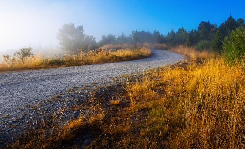 路在有薄雾的早晨 免版税库存照片