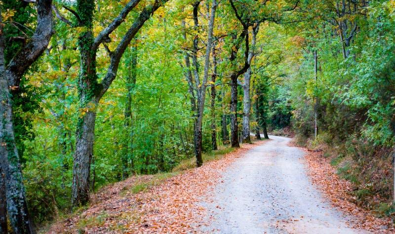 路在森林里向巴迪亚Coltibuono 免版税库存照片