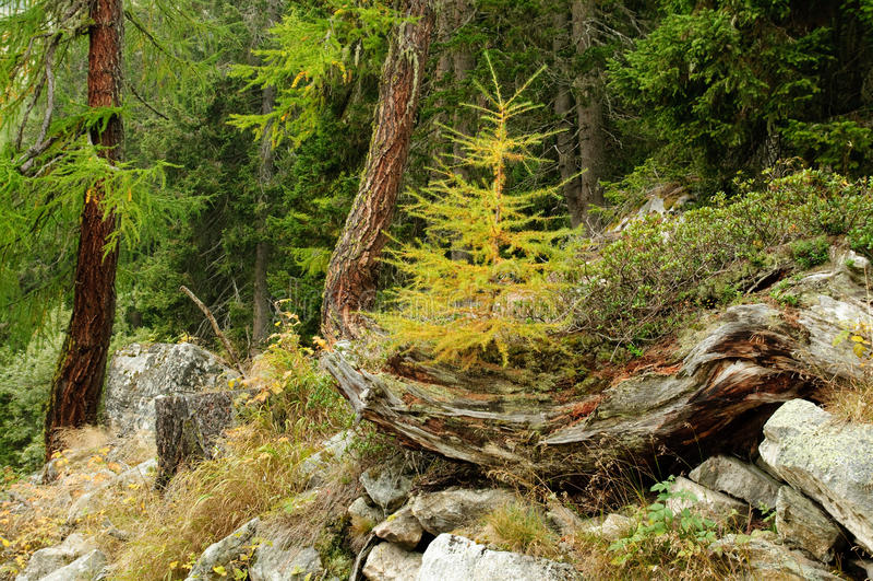 路在森林里 图库摄影