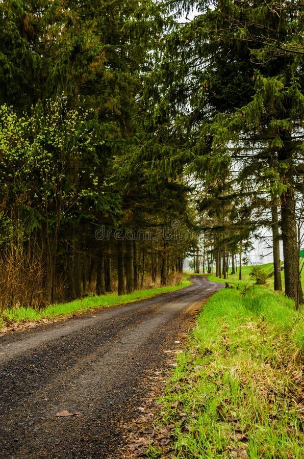 黑路在森林里 免版税库存照片
