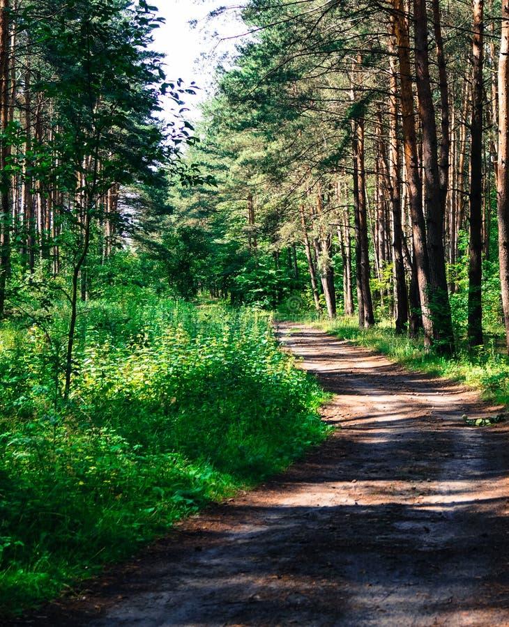 路在森林,太阳光芒通过树美好的风景击穿 免版税库存照片