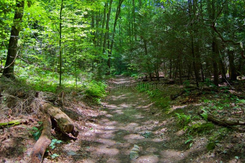 路在森林 免版税图库摄影