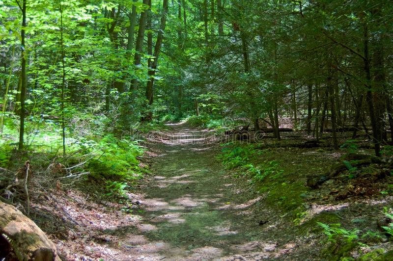 路在森林 免版税库存图片