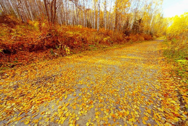 Download 路在秋天 库存照片. 图片 包括有 水平, 农村, 橙色, 自治权, 红色, 旅行, 结构树, 10月, 平静 - 30330718