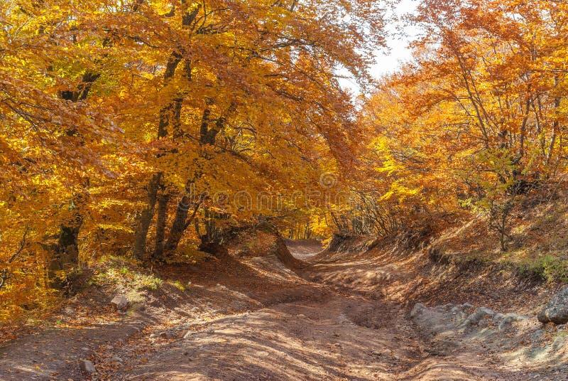 路在秋季的山森林里 库存图片