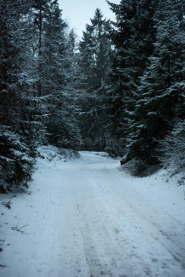 路在雪盖的杉木森林里 免版税库存图片