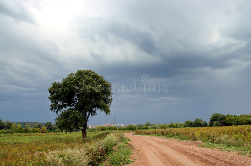 路天空下风暴结构树 库存照片