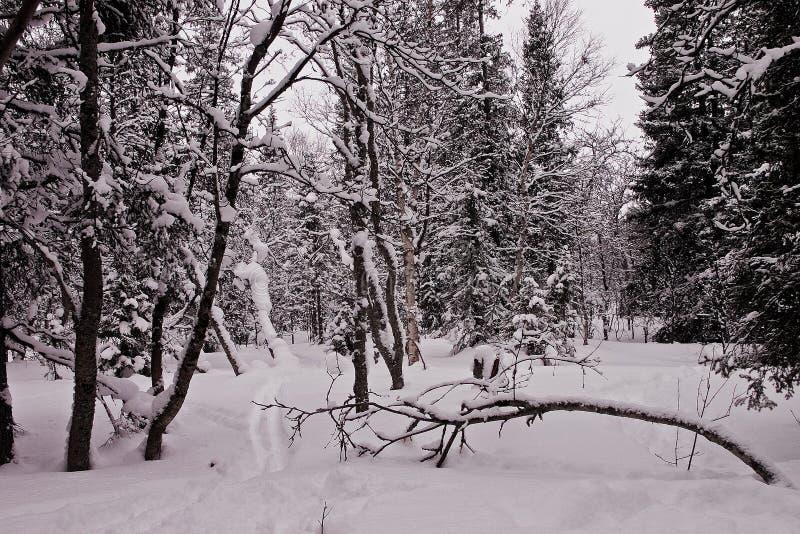 路径冬天木头 免版税库存图片