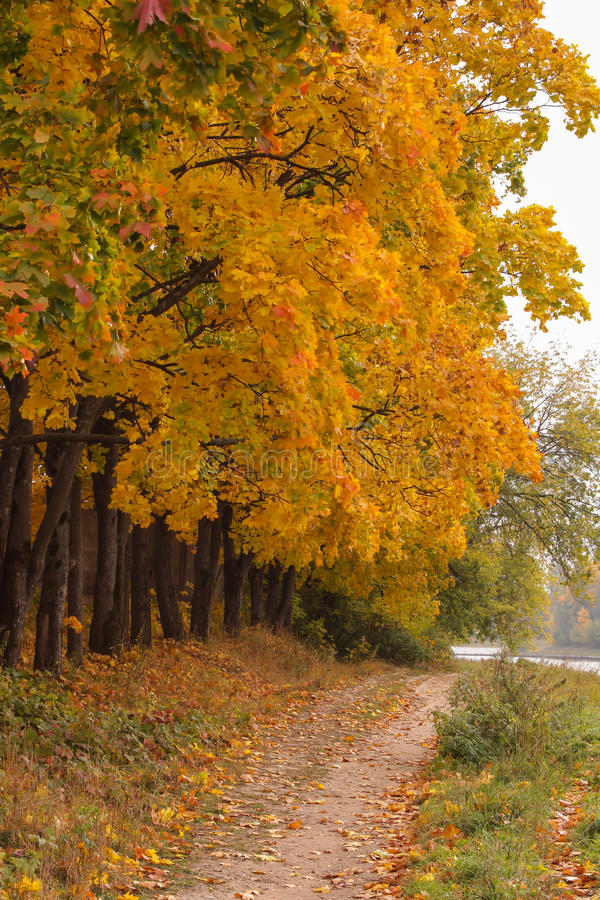 路径在森林里 免版税库存图片