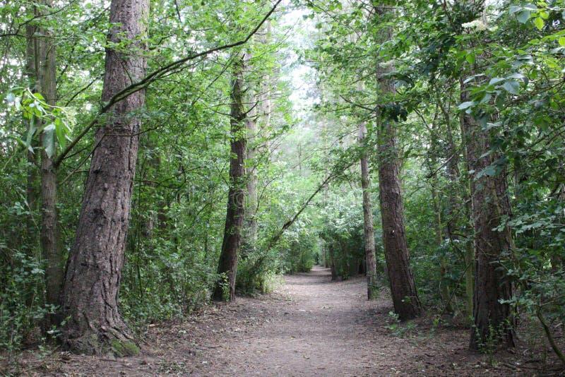 路径在森林 免版税库存图片