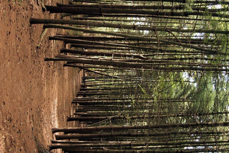 路径平静树木繁茂 库存照片
