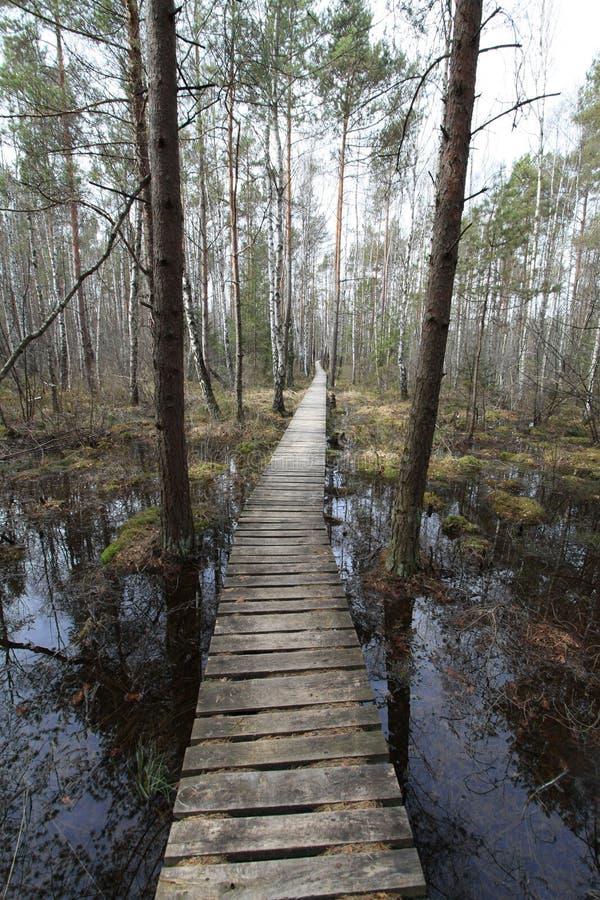 路径沼泽 免版税库存图片