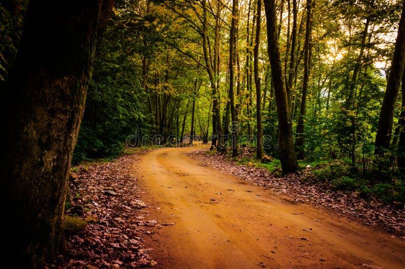 路径穿过森林 库存图片