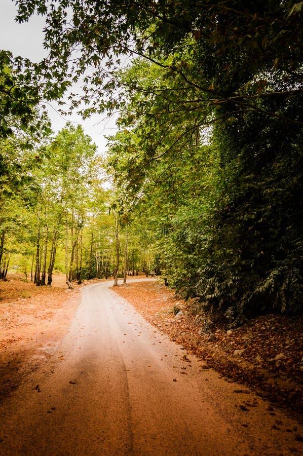 路径穿过森林 免版税库存照片