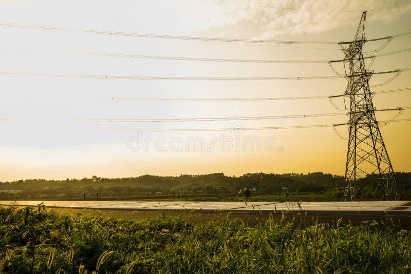 路旁杂草在夏天下午阳光下 库存图片