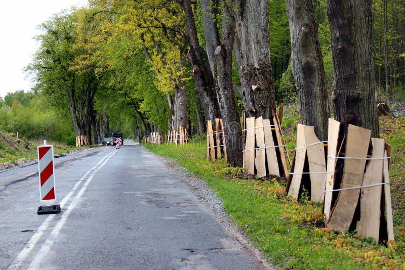 路旁树树干木板条的保护的在修路时 库存图片
