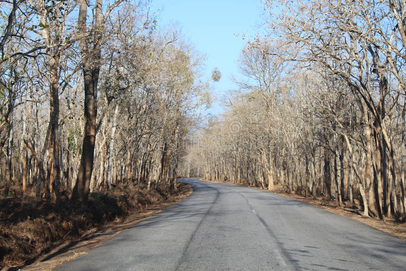 路旁边树 图库摄影