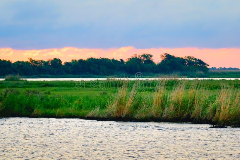 路易斯安那多沼泽的支流场面 免版税图库摄影