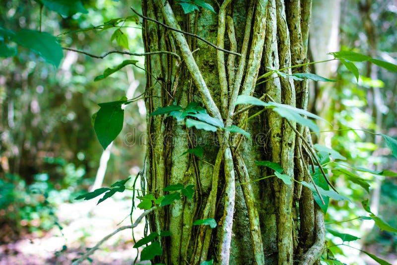 路易斯安那森林 免版税库存照片