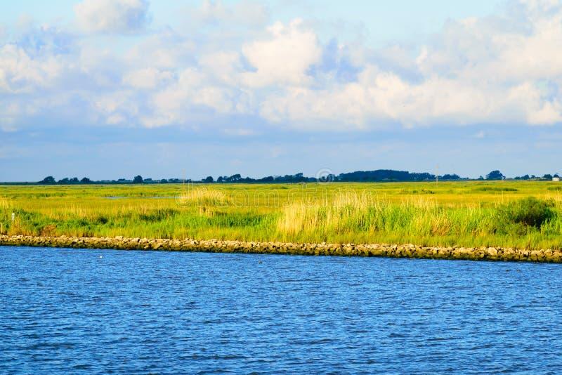 路易斯安那沼泽地 库存图片