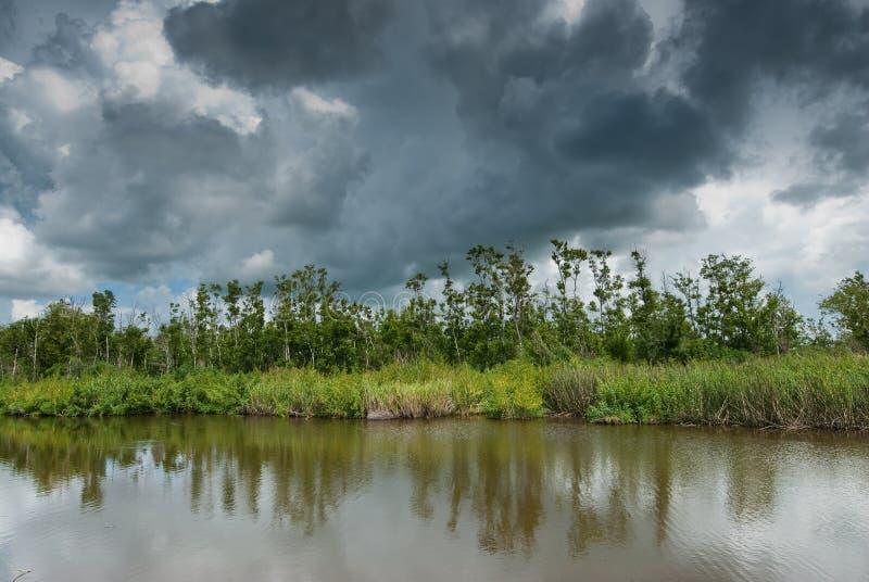 路易斯安那沼泽 免版税库存图片