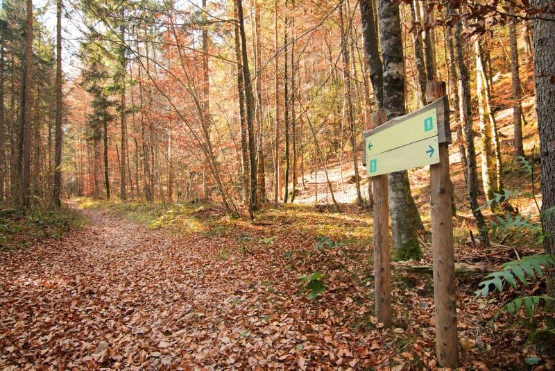 路标在森林,两个方向,双向 库存图片