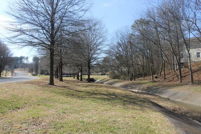 路树和一点在冬天劈裂 免版税图库摄影