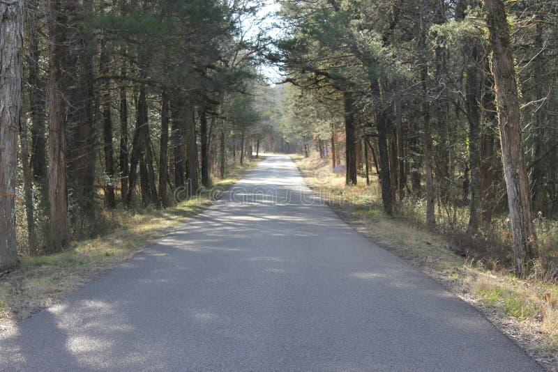 路森林晴朗的冷的天 免版税库存照片