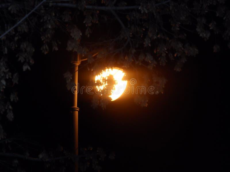 路灯到底,在树枝后的冷清的街道灯在一个夏天晚上在长凳附近的一个公园 免版税库存图片