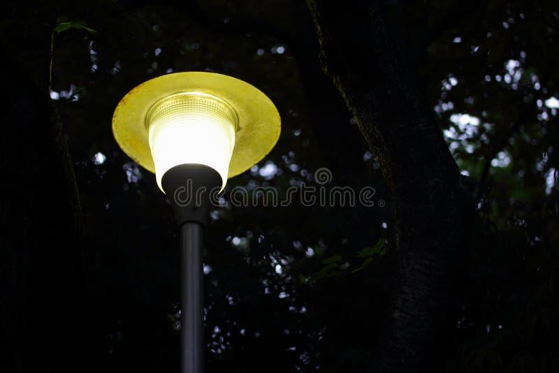 路灯柱在公园 免版税库存照片